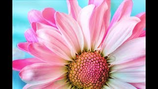 Best Beautiful Flower Wallpapers