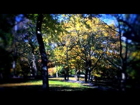 Música Árbol De Manzanas