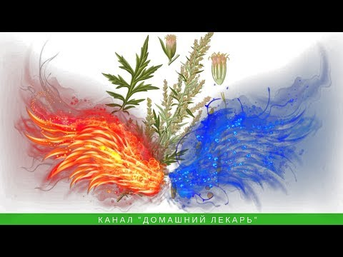 Магическая сила полыни: снимает порчу, сглаз и болезни - Домашний лекарь - выпуск №122