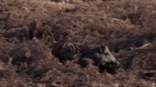 Top 10 Slow Motion Shots   Wild Boar Hunting Coming SOON
