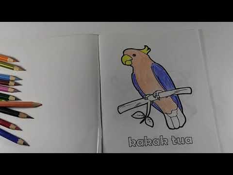 Unduh 76+ Foto Gambar Burung Kakatua Untuk Mewarnai HD Terbaru Free