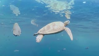 Swim underwater with a Turtle! 360 video | Our Blue Planet | Earth Unplugged