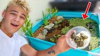 WORLDS smallest DIY BACKYARD TURTLE POOL POND!!!