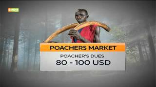 VIDEO: Why containing Ivory market is a global challenge