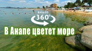 Цветущее море в Анапе 2018 — Видео 360 градусов
