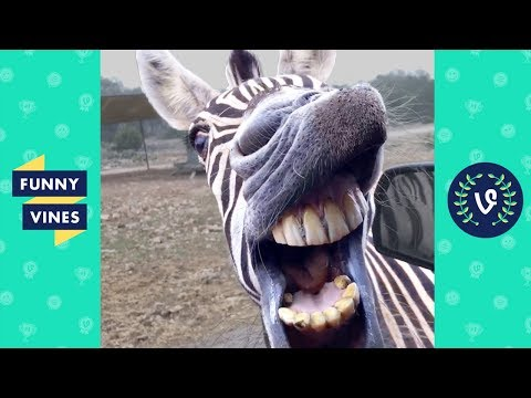 TRY NOT TO LAUGH - BAD DAY?? WATCH THESE FUNNY ANIMALS!