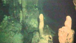 Elephant Cave by Omegadivers.com