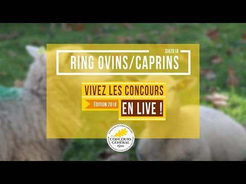 Voir la vidéo : Ring Ovins et Caprins du 01 mars 2018