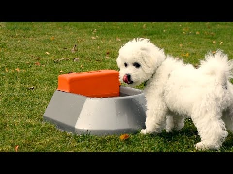 7 Amazing Pet Gadgets 2018 You Must Have