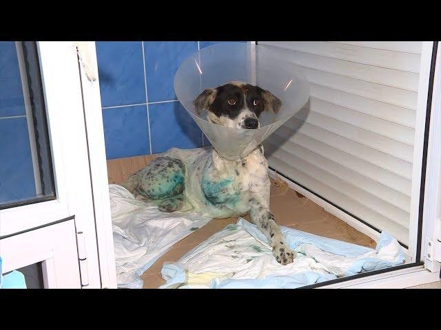 Заботливый хозяин нужен спасенной собаке
