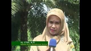 Peluang Investasi Komoditi Unggulan Kalimantan Timur