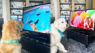 WILL OUR DOGS WATCH TV WHILE WE'RE GONE?