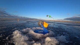 Первый лед 2019 2020 рыбалка на жерлицы