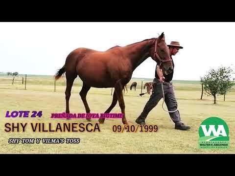 Lote SHY VILLANESCA