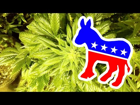 Conservative Democrats FACEPLANT On Weed