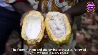 preview picture of video 'PACTS Cocoa, high quality cocoa in Côte d'Ivoire'