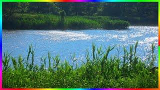 Природа родного края.Это видео релакс о природе родного края. У нас в городе есть несколько прудов. Я часто снимаю на фотоаппарат жизнь обитателей этих прудов. В этом видео в кадры попали черепахи, ужи, водяная крыса, лягушка. Наш мир