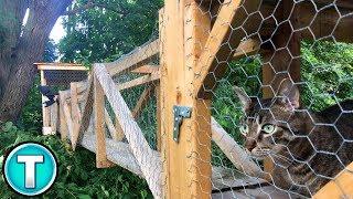 Worlds Best Outdoor Cat Enclosure