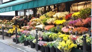 Flower Shops -  Flower Shops Near Me