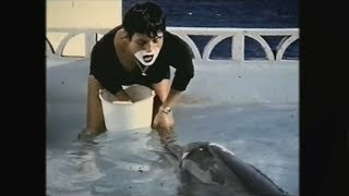 Teaching a dolphin to speak English - The Girl Who Talked to Dolphins: Preview - BBC Four