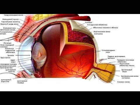 Зрение минус близорукость или дальнозоркость