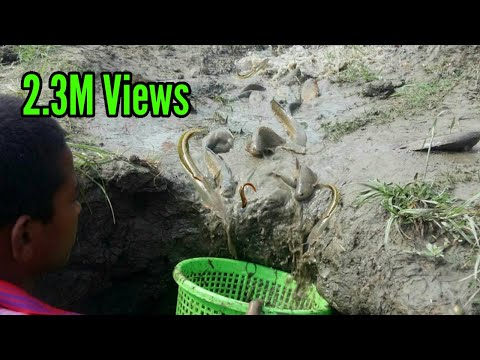 Little Boy Catching Fish After Rain.A Lot Of Fish Coming With Raining Water.Best Hand Fishing video