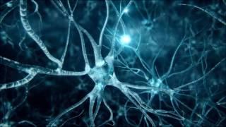 Suduaya - Cellular Memory