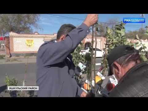Управлением Россельхознадзора на территории Республики Калмыкия зафиксирован очередной факт реализации посадочного материала без документов