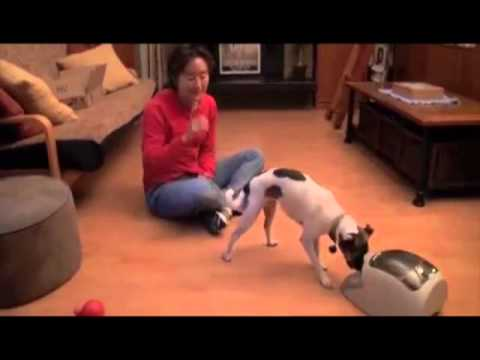 Using the Treat & Train to Teach a Dog to Play Fetch