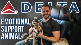Emotional Support Animal Delta FIRST-CLASS