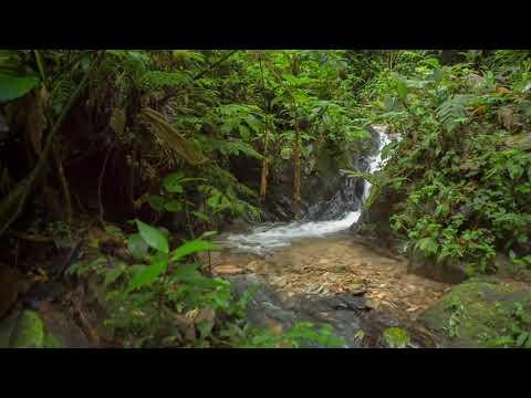 """Mundo de agua"" en Mashpi Lodge - Ecuador"