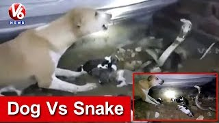 Dog Vs Snake | Dog Fights With Cobra To Save Puppies | Odisha | V6 News