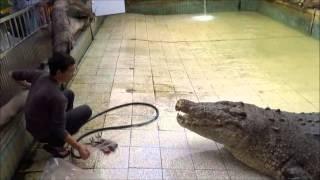 """~""""鱷魚王""""吃早餐~"""