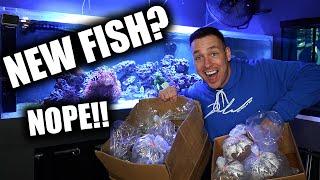 UNBOXING AQUARIUM CORAL! - The king of DIY saltwater fish tank
