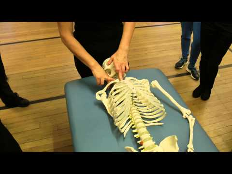 Anatomy of the neck for massage therapists