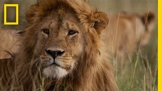 Africa's Big Five Animals: What Are They? | National Geographic