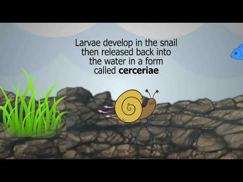 A paraziták toximin válása