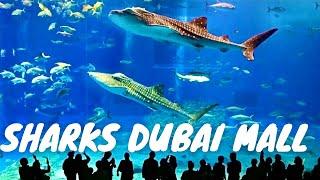Dubai Aquarium & Underwater Zoo, Dubai