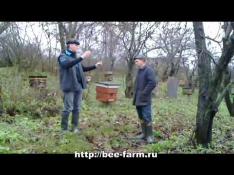 Инновационное пчеловодство