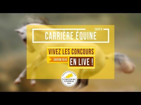 Voir la vidéo : Carrière Équine du 24 Février 2018