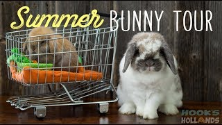 Summer Bunny Tour - BABY BUNNIES!
