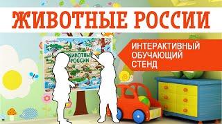 Тактильный обучающий стенд «Животные России»