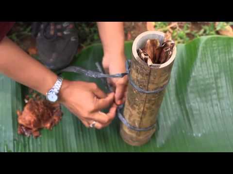 Video Budidaya Semut Hitam (Breeding of Natural Enemies)