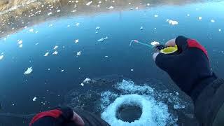 По первому льду ловля рыбы