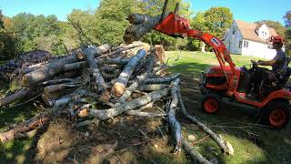 Removing dead trees