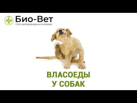 Власоеды у собак. Профилактика и лечение