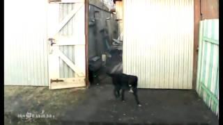 Deal with it! / Собакам тут не место! - Video Youtube