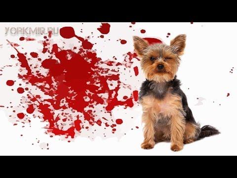 Понос с кровью у собаки | Причины | Лечение.