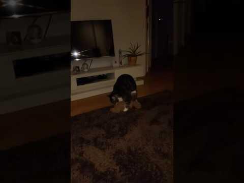 Sex-Video mit einem weichen Spielzeug