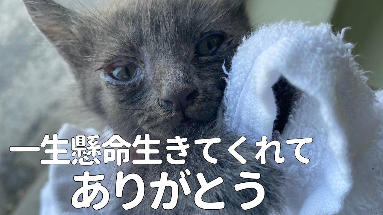 【保護猫  子猫】庭でうずくまって衰弱した子猫を保護しました